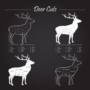 33677833 - deer / venison meat cut diagram scheme - elements on chalkboard